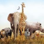 Hoeveel zoogdieren zijn er?