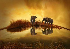 Het dierenrijk