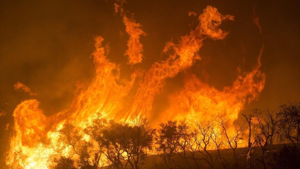 Dieren kunnen bosbranden voorkomen. Maar doen het soms niet...