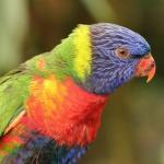 Waarom hebben dieren felle kleuren?