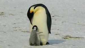 Dit zijn de beste vaders van het dierenrijk